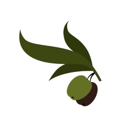 Olive fruit plant icon vector