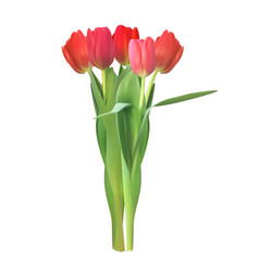 realistic colorful tulips vector image