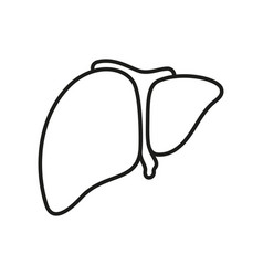 liver icon on white background vector image