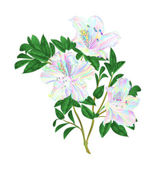 twig flowers multicolored rhododendrons twig vector image
