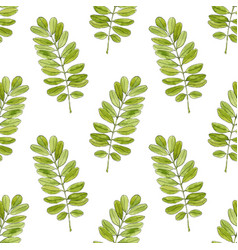 watercolor seamless pattern with acacia leaves vector image
