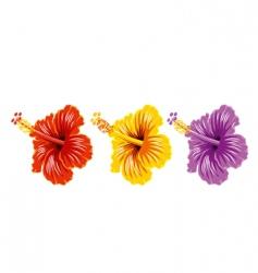 set of hibiscus vector image
