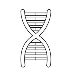 dna molecule chromosome biology genetic line vector image vector image