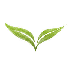 drawing green leaves botanical vector image vector image