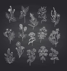 hand drawn medical herbs set on black vector image