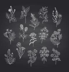 Hand drawn medical herbs set on black vector