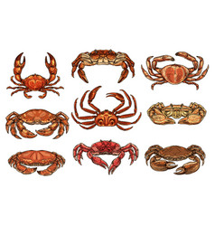 hermit hairy and king crans lobster vector image