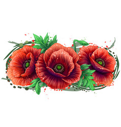 red poppy graphic color drawing vector image