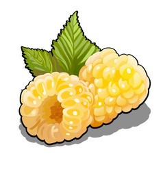 set of berries yellow raspberries fruits or rubus vector image