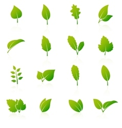 Set of green leaf icons on white background vector image