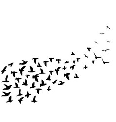 Black flock birds flying background vector