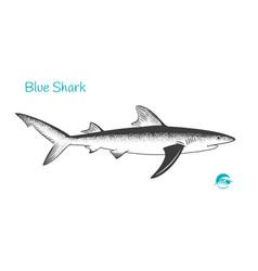 blue shark hand-drawn vector image