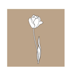 hand drawn of side view black and white tulip vector image