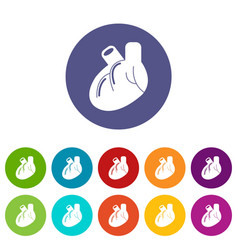 heart organ icons set color vector image
