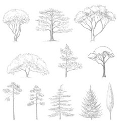 Sketch of trees vector