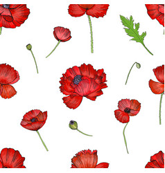 seamless pattern with red poppies flower colorful vector image