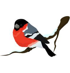 bullfinch bird winter vector image