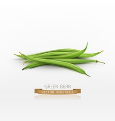 Bunch of green beans isolated on white background vector