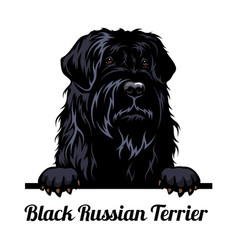 peeking dog - black russian terrier - dog breed vector image