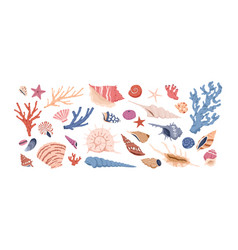 seashells corals and starfishes collection vector image