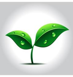 green plant with water drops on leaves vector image vector image