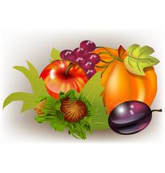 Fall harvest in autumn vector