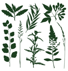 Herb vector