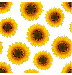 Orange yellow sunflower seamless on white vector