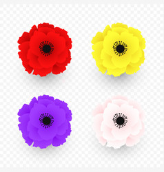 set isolated yellow pink red poppy icon vector image