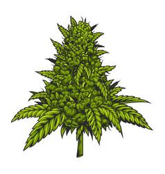 Vintage green cannabis plant concept vector