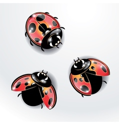 Three red ladybugs vector image