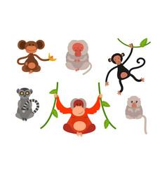 different types of monkeys rare animal set vector image