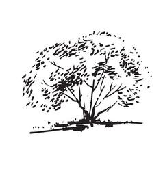 hand-drawn bush black and white realistic image vector image