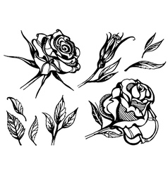 Flower rose 2 vector