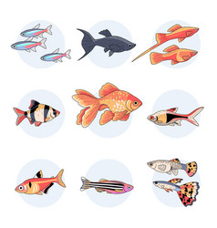 Popular aquarium fishes part 1 vector