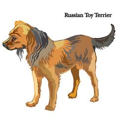 Russian toy terrier vector