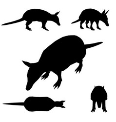 Set with silhouettes an animal armadillo vector