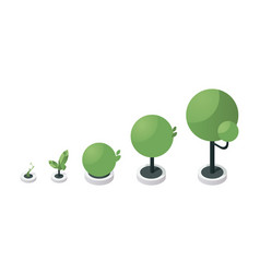 Tree growth stages isometric vector