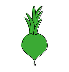 Turnip vegetable icon image vector