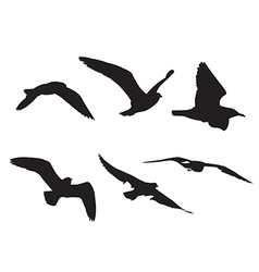 22 Seagull Silhouette Set1 vector