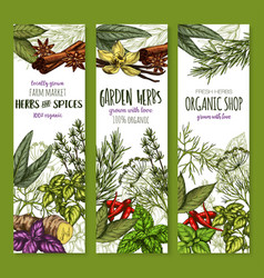 Banners sketch spices and herbs seasonings vector