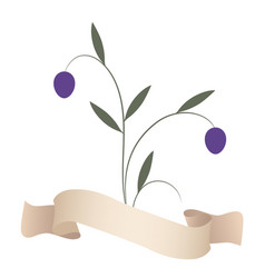 olive branches and purple olives isolated on vector image