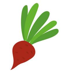 Beet harvesting product vegetable or root vector