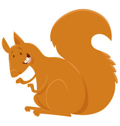 squirrel cartoon animal character vector image