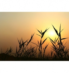 sunrise scene vector image