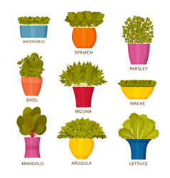 indoor gardening icons with lettuce vector image
