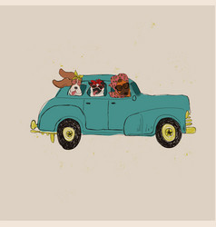funyy dogs driving car vector image