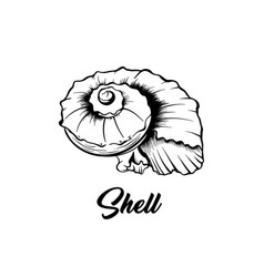 sea shell black ink vector image