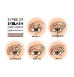 Types eyelash extensions vector