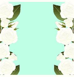 White rose flower border vector